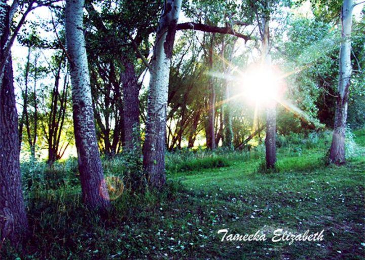 Tameeka the woods