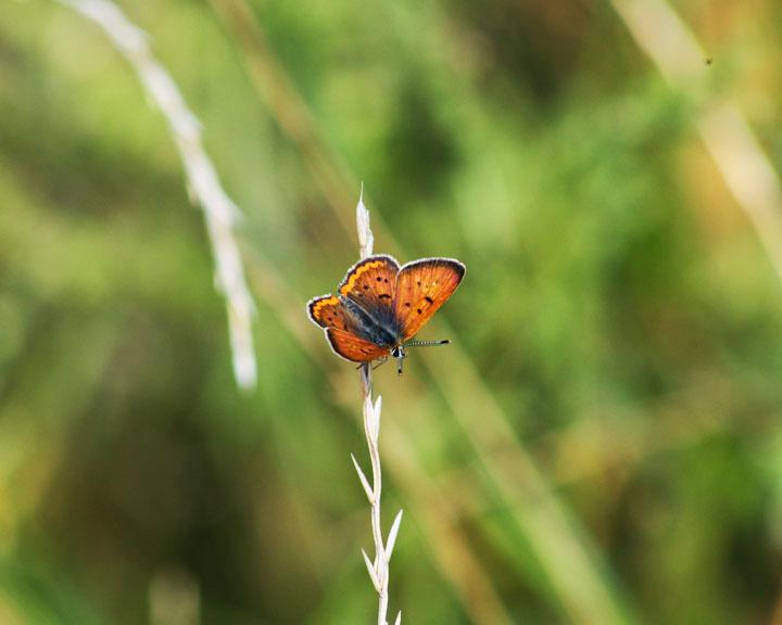 """""""Butterfly"""" by Kali Waters"""