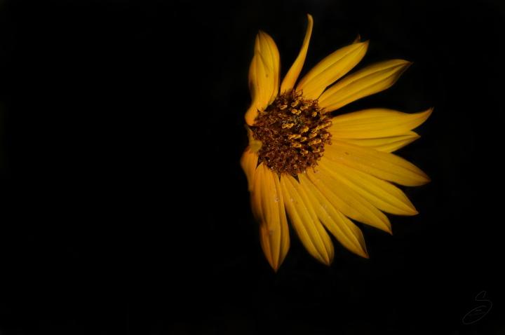 Stevie Ellingson - Light in the Dark
