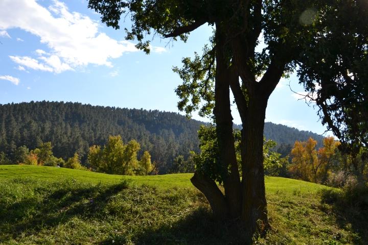Hannah Coleman Tree