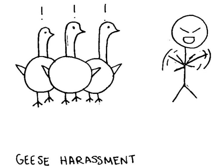 geese-harassment